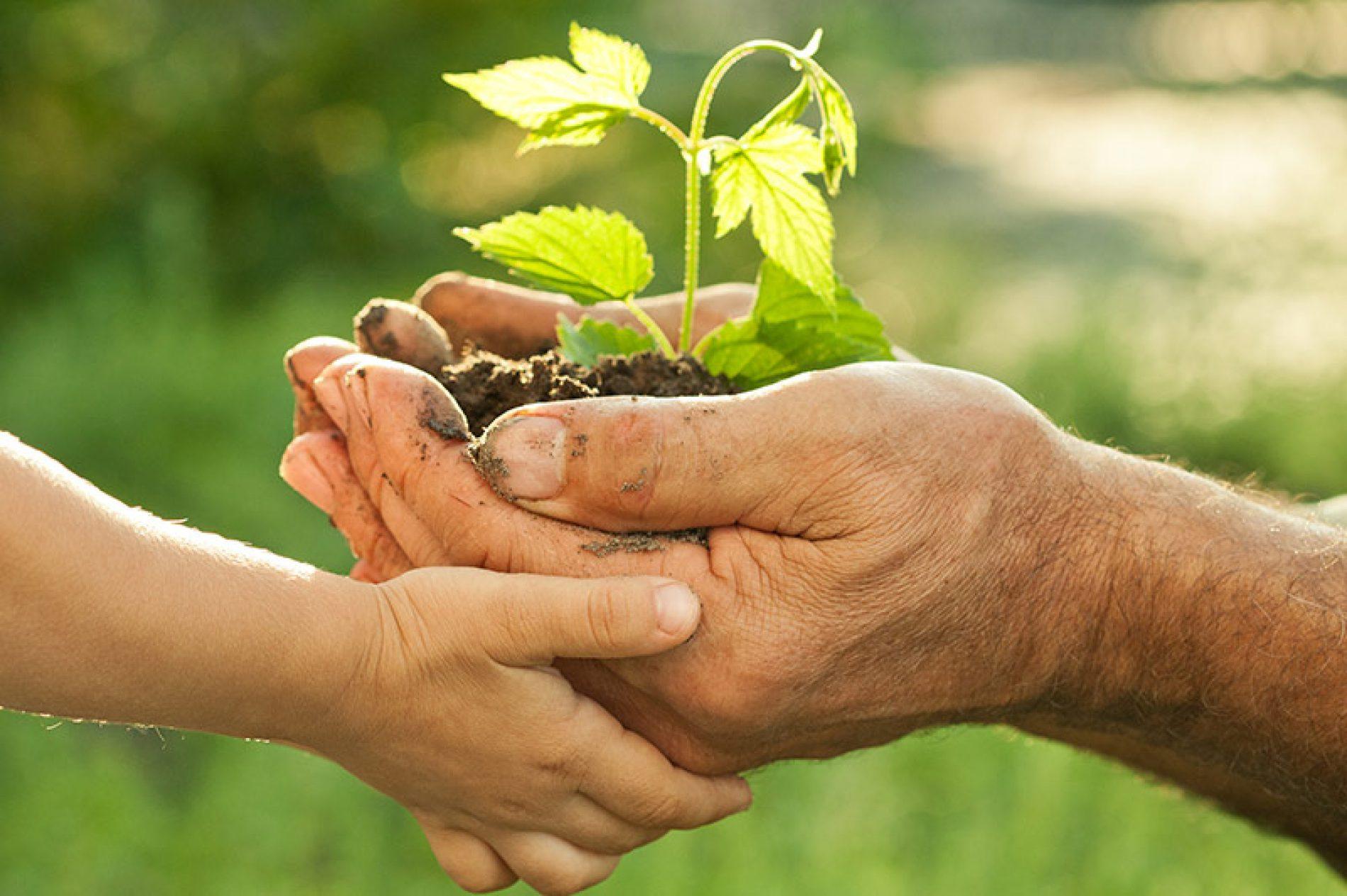 Riforma ISPRA: arriva il nuovo Sistema nazionale a rete per la protezione dell'ambiente