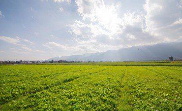 Generazione Vincente entra a far parte della Rete del lavoro agricolo di qualità