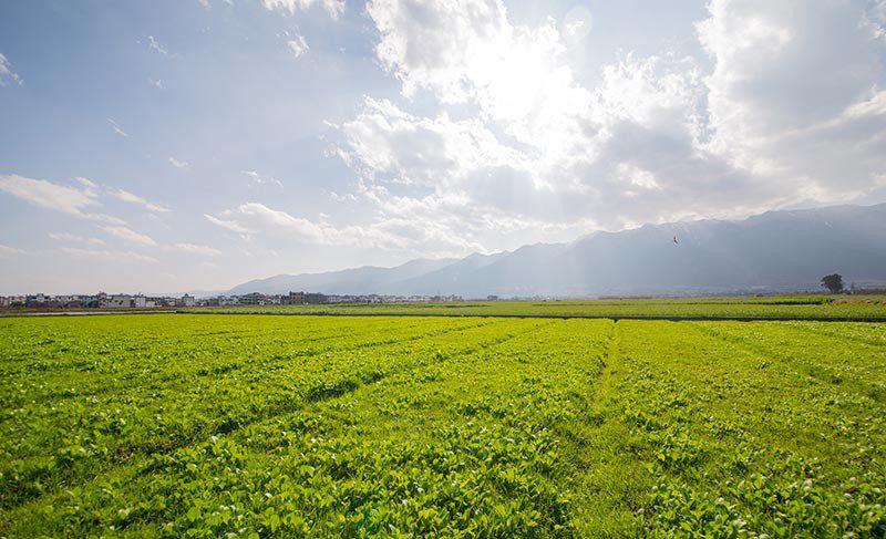 rete del lavoro agricolo di qualità