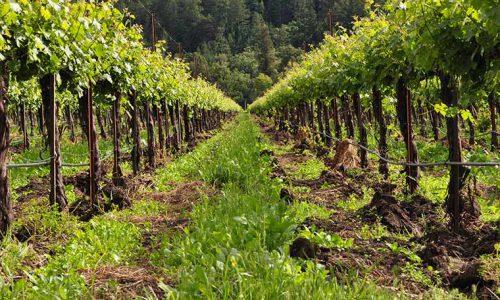 Semplificazione e competitività: arriva una nuova legge per il settore agricolo