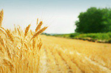 Cia: il settore agricolo migliora ma ha ancora margini di miglioramento