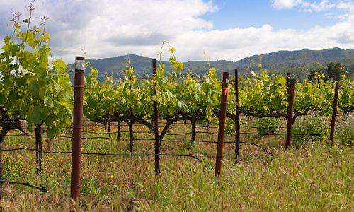 PSR Campania: nuovi bandi per rafforzare aziende agricole e favorire ricambio generazionale