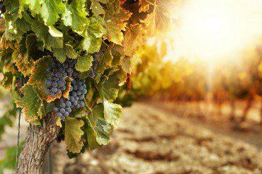 Startup e contadini 4.0: il futuro del settore agroalimentare