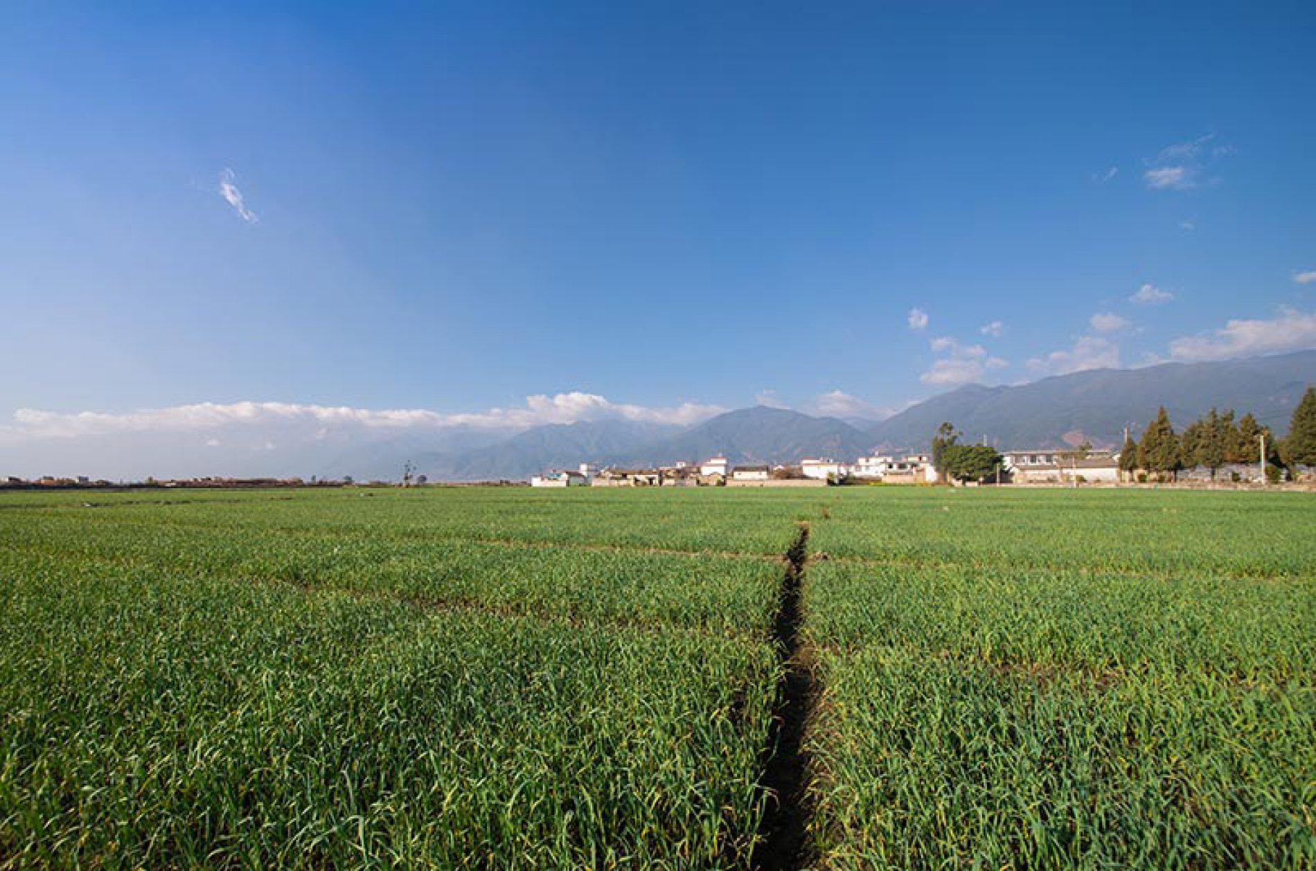 Bando Isi Agricoltura: fondi per la sicurezza alle aziende agricole