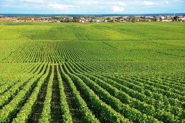 Cipe: stanziati 400 milioni di euro per il settore agricolo e agroalimentare