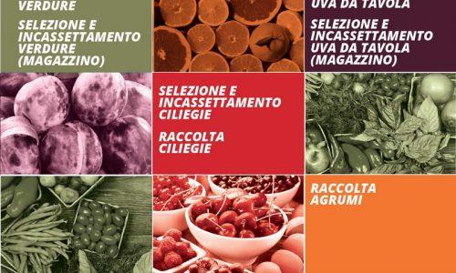 Agrifree: Formazione e legalità nel settore agricolo, nuove edizioni in partenza.