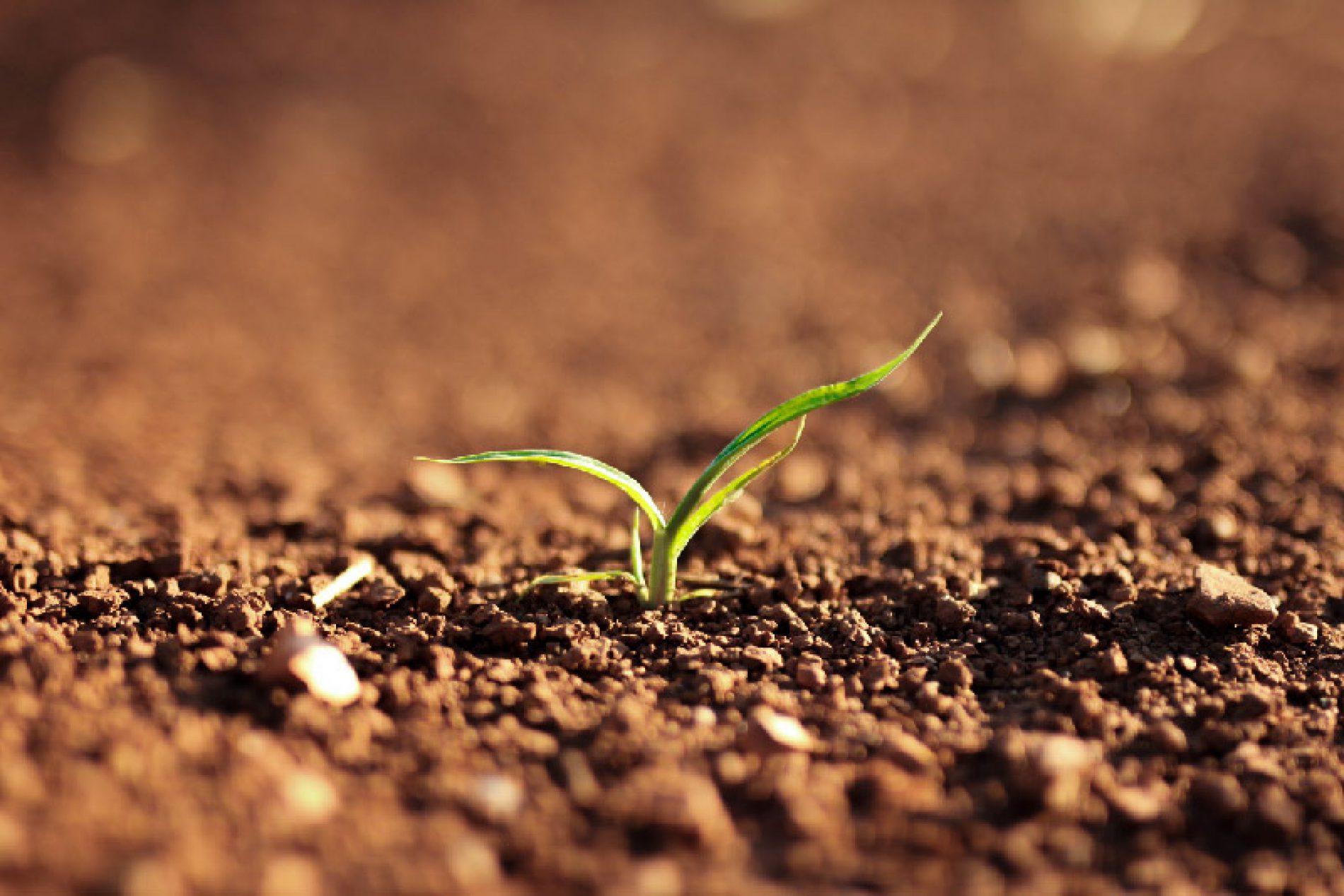 Agronomia 2.0: nuove figure per le imprese agricole del futuro