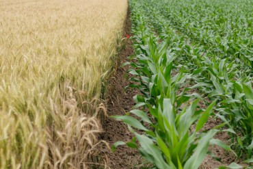 Agricoltura: mobilitazione contro accordo UE-Canada fa slittare voto sul CETA