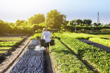 CCNL operai agricoli: Fai, Flai e Uila approvano piattaforma