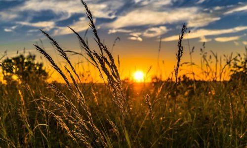 Aziende agricole: obbligo certificato antimafia per accesso ai Fondi UE