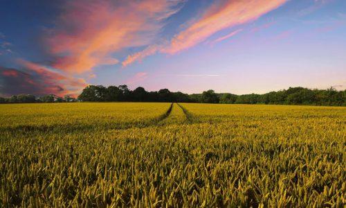 Agricoltura 4.0: il futuro del lavoro è nell'agroalimentare