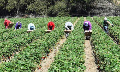 NASpI e compatibilità nelle ipotesi di rioccupazione come OTD in agricoltura