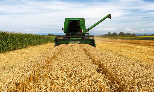 Il Made in Italy che vince: in un anno franato l'import grano dal Canada a favore di quello italiano