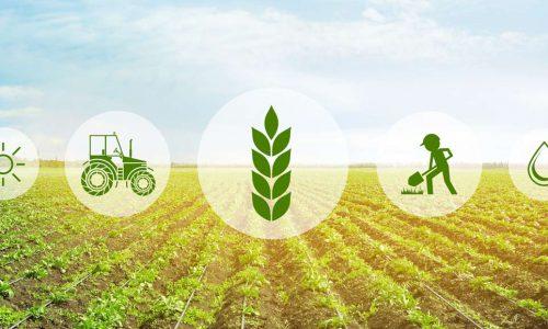 Agricoltura di precisione: ricerca e innovazione nel mondo agricolo