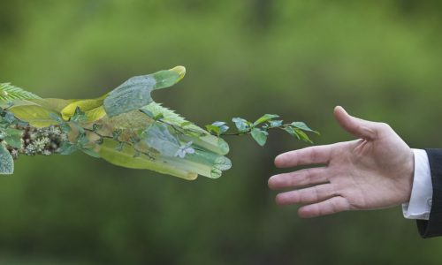 Transizione verde e sviluppo 2020 – L'economia sostenibile per creare nuove opportunità