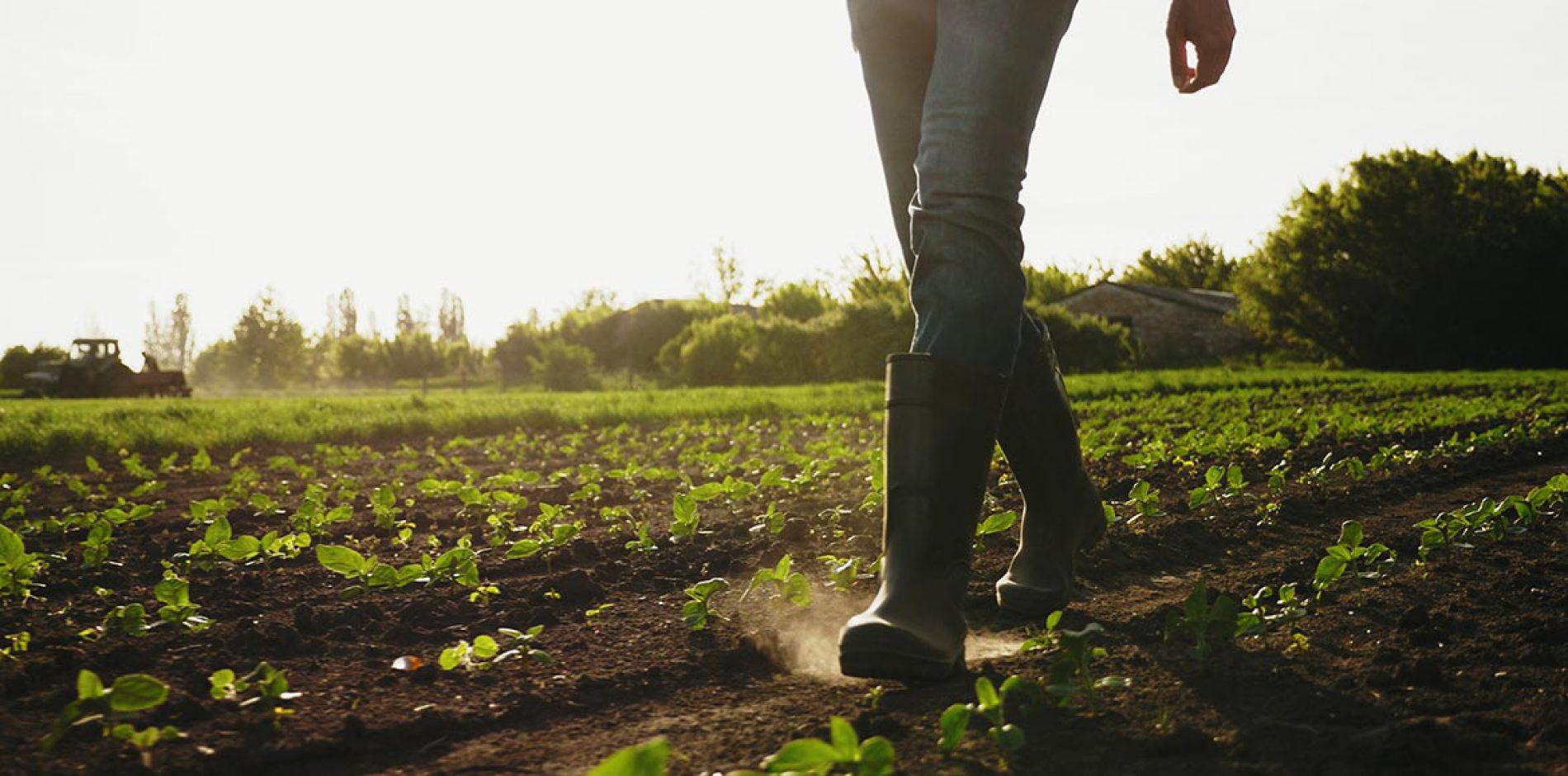 Contratti a termine in agricoltura per i percettori di Reddito di Cittadinanza [INPS]